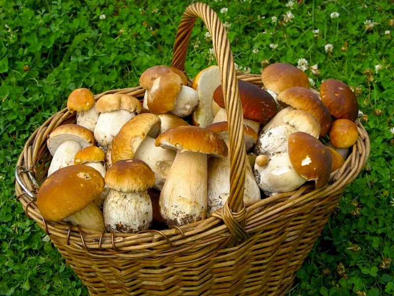 Можно ли есть грибы при сахарном диабете 2 типа?