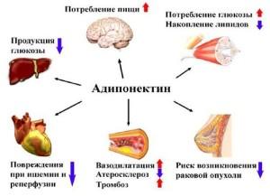 kak-mozhno-povysit-uroven-adiponektina-v-krovi1